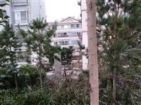 为行方便,砍树通行