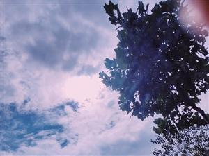 乌云蔽日难来光,只露微圆亮点苍。