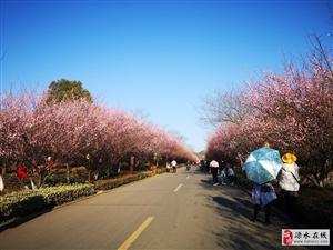 2021溧水梅花节开幕式暨夜梅亮灯仪式彩排