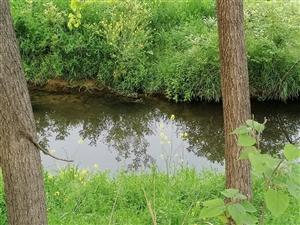 小时候,常在河边走,看父亲用撒网捕鱼,而我在岸上把网中的鱼放入袋子里。小时候,常在河边走,