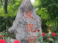 南京市溧水区玫瑰园花盛开,美极了!地址:溧水区石湫镇