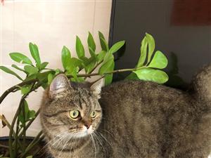 喜欢猫咪的朋友有吗,赠送