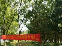 春东湖广场