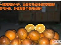 找脐橙沙皮果园