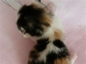刚出生二十天天的小猫咪,开始预定