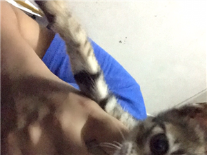 给小猫找新主人,家猫宠物猫狸花猫