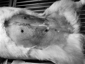 宠物疾病治疗