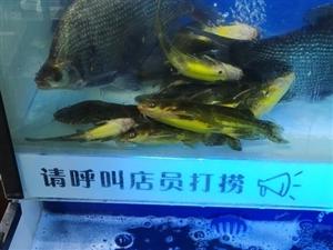 出售商用鱼缸一组!上下两层共4口。