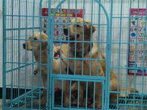 现出售中大型狗笼,用过一年,因爱犬丢失,所出售狗笼
