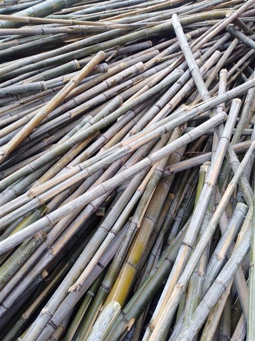 这都是安徽竹子,有去年和今年的