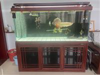 森森金晶超白鱼缸尺寸1.8×60×70滤材全部都是牌子。还有缸里的设备。用起来一万多,现在5500出...
