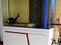 长1.2米总高1.58米缸体高一米宽0.35米,底滤过滤系统超白玻璃,含泪低价带鱼处理1500。**...