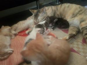 小猫找领养,目前还剩下三只小橘猫,身体健康,免费领养,想找沾化当地人,如果有意向打电话联系我,我们详...