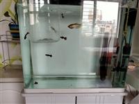 出售鱼缸长500宽300高400!上过滤!带鱼加热棒!温度计!