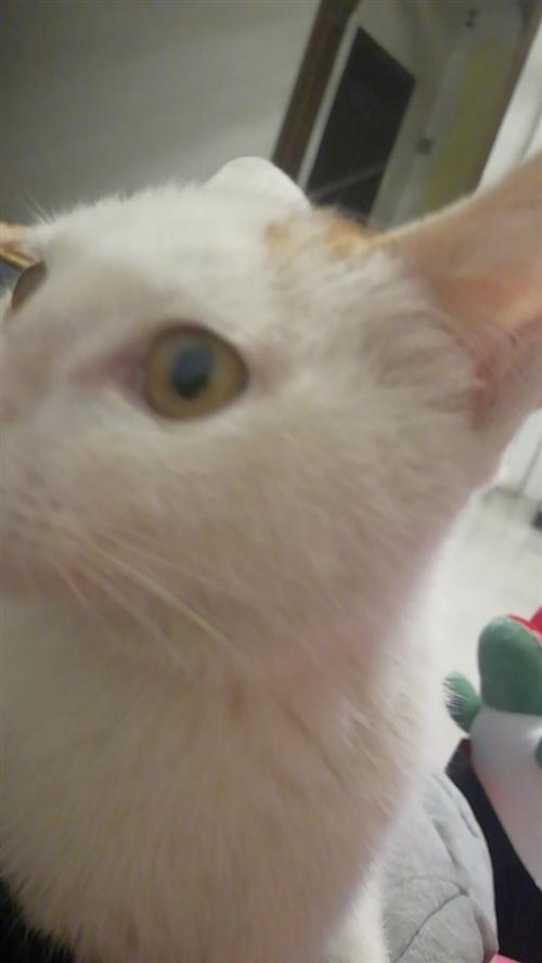 領居家的小貓,六個月大,公貓,求領養。免費送上門。