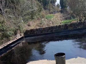 专业防水 防水补漏