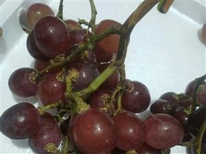 过年吃葡萄啦