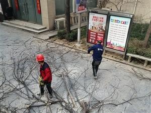 专业伐树,修树,清理绿化垃圾