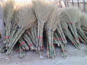 大量竹扫把出售 有意者请致电19947840047