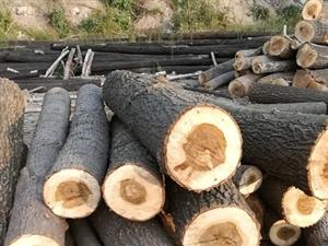 大量收购杨树,柳树,杂木