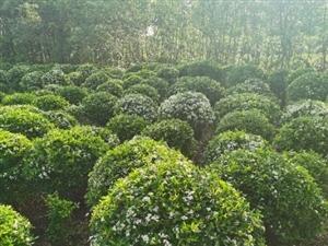 专业承接小区绿化,小区养护。