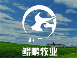 内蒙古牛羊肉