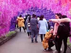 哇,美呆了~!2021修水首届紫藤花海美食娱乐狂欢节向你发出邀请!3月19日,约起来~