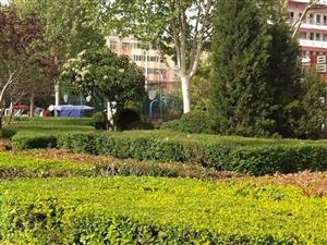 """昨天,�城�@群人在大街上�o植物""""剃�^""""!"""