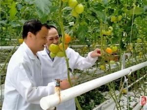 市�r�I�r村局:指��o土栽培番茄生�a技�g