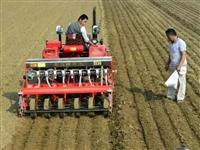 【扩散】滑县小麦要晚种,最佳时间是…