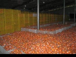 求购6000斤脐橙,80-90果,要求甜度高,无冻伤