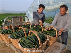 �钋f�l:新型��I�r民科�W�N出新瓜菜