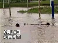 河南省周口市,两名熊孩子竟然躺在暴雨过后积水的道路中泡澡,当成了天然游泳