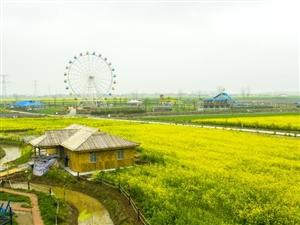 安徽望江第五届油菜花赏游活动将于3月22日启动