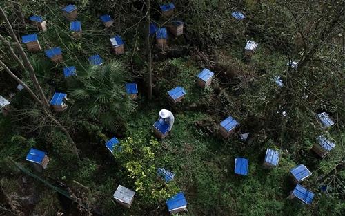 恩施州尚风寨蜂业有限责任公司