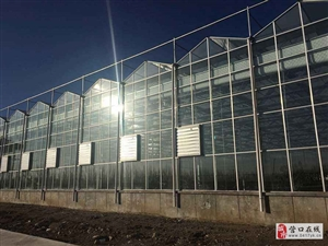 营口玻璃智能温室大棚 日光温室大棚建造