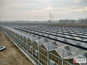 淄博玻璃智能温室大棚日光温室大棚建造公司
