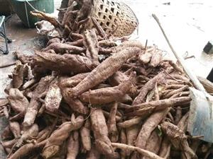 出售野生葛粉,30元/斤,量大从优。