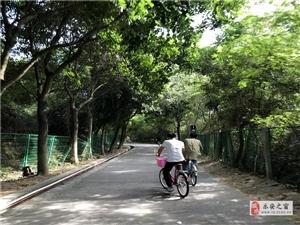 深圳公司留深过年活动方案以及深圳春节游玩好地方推荐