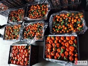 栾川大量批发零售砂糖橘、川橘,有意者电话联系