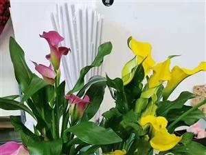 愿你与爱人邂逅在一个鲜花的约会——敖汉花唯美花店