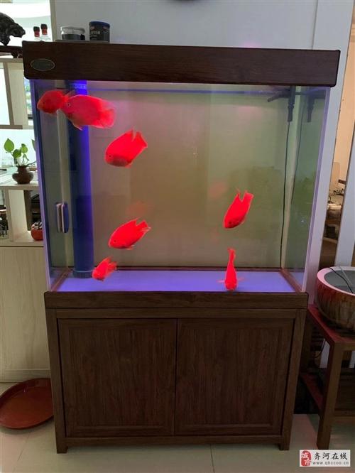 出售9成新高档家庭鱼缸一个