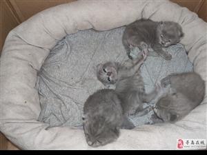 刚出生小猫欢迎预定