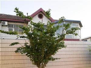 42年紫荊花树,出售1.6万