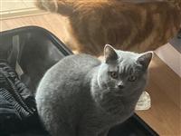 蓝猫妹妹找对象!