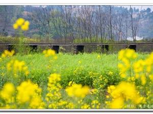 大悟春色――东风无杂念,春色即成诗