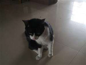 收养#爱猫人士请留步