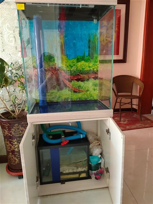 由于本人急需用錢,現將1600元購買的魚缸半折出售,只需800元,使用半年,魚食魚料都有,有需要的請...