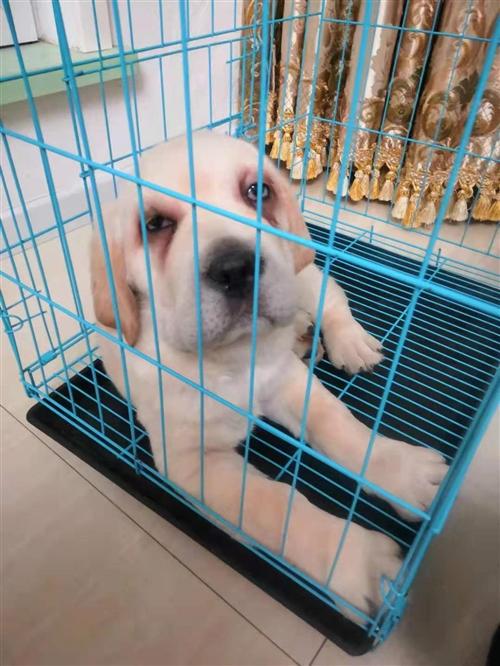 家里搬家,可爱的小狗实在没人照顾。想找个好人家。500元就卖