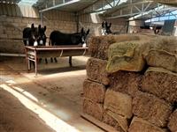 本人富山,卖毛驴十个,四百多斤公驴,驴司料三吨谷草六吨,毛驴23一斤,司料三千一,谷草1050自取,